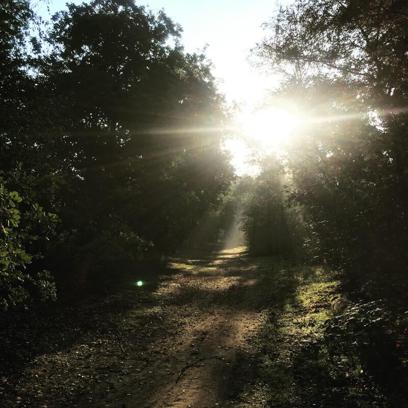 voordeel trainen in de ochtend uitzicht